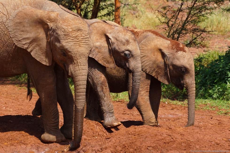 Three little... elephants!